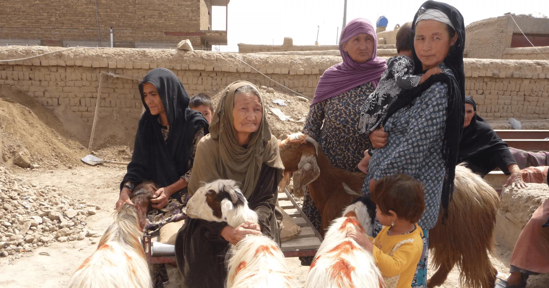 capre-afghansitan